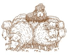 blacksheep - stock illustration