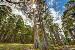 Sun beams trees - stock photo