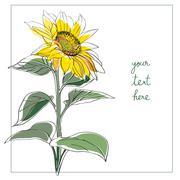 Sunflower minimal card Piirros