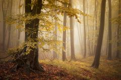 Autumn in forest with fog Stock Photos