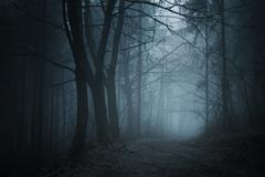 Path trough haunted forest with fog at night on Halloween - stock photo