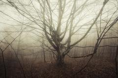 Tree with big branches in surreal haunted forest on Halloween - stock photo