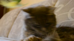Cat playing with a skein on the couch Stock Footage