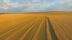 AERIAL VIEW. Field of Wheat After Harvesting Stock Footage