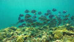 Tropical fish schooling over coral reef Stock Footage