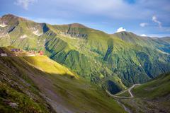 Transfagarasan mountain road with wild flowers from Romania Stock Photos