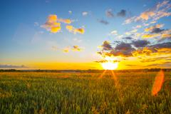 Wheat field and sunset Stock Photos