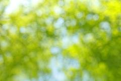 Blurred green foliage background texture Stock Photos