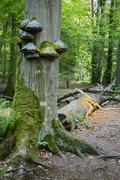 Stock Photo of Fungus and moss growing on a tree trunk in a peaceful forest in the Ardennes,