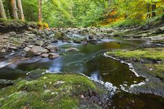 Stock Photo of A small mountain stream in the High Fens, Ardennes, Belgium running between g