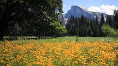 Stock Video Footage of 3 Axis Motion Control Time Lapse of Half Dome over Flowers in Yosemite Long Shot