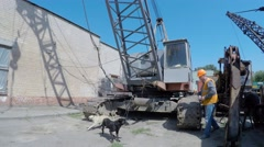 Construction crane operator lunches with stray dogs. pye-dog Stock Footage