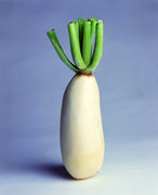 Sugar beet - stock photo