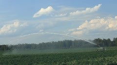 Sprinkler irrigation potato field. - stock footage