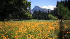 Stock Video Footage of 3 Axis Motion Control Time Lapse of Half Dome over Flowers in Yosemite -Zoom In-