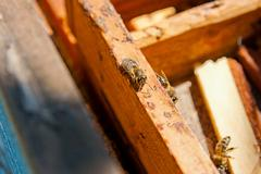Busy bees, close up view of the working bees. - stock photo