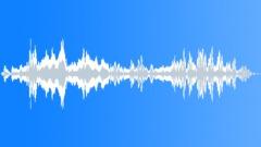 Animals_Bumble Bee_Bombus hypnorum_04 Sound Effect