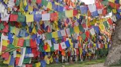 Monkeys playing in prayer flags,Rewalsar,Himachal Pradesh,India Stock Footage