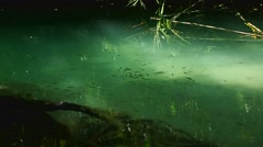 Small fishes in the stream Stock Footage