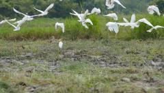 Flock of storks flying away Stock Footage