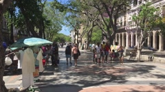 Beautiful tree-lined street in Havana, Cuba Stock Footage