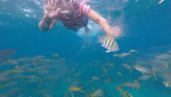 Snorkeling Coral Reef Stock Footage