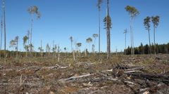 Clearcut land. Land that has been logged in Northern Ontario. Stock Footage