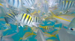 Snorkeling a living Coral Barrier Reef in the Florida Keys. Stock Footage