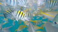 Stock Video Footage of Snorkeling a living Coral Barrier Reef in the Florida Keys.
