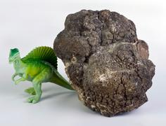Dinosaur Poop. - stock photo
