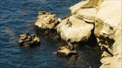 Sea Lion Sunbathing Stock Footage