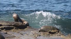 A Sea Lion and Sea wave. Stock Footage