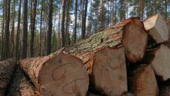Felled tree trunks in the forest Stock Footage