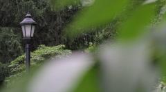 Rack Focus Rain | Weather Report | Rain drops on leaves Stock Footage