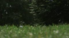 Close up of a hitten golf ball Stock Footage