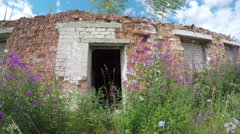 Rural house ruins with wild flowers  in wind. Timelapse 4K Stock Footage