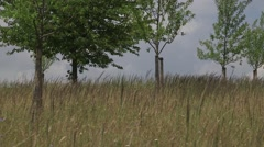 Camera zoom out of a field on a sunny day Stock Footage