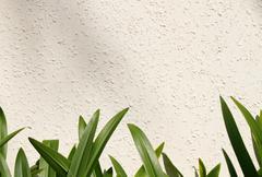 Leaf on white wall (amaryllis leaf) Stock Photos
