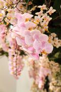 Pink orchid blossoming - stock photo