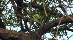 A Green Parrot Stock Footage