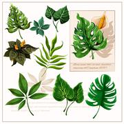 Stock Illustration of Green tropical leaves pictograms set