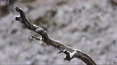 Tasmanian winter - stock footage