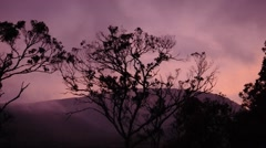Tasmanian Morning Stock Footage