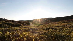 Slider shot in a sunny tundra landscape Stock Footage