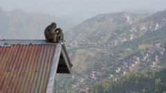 Monkey with baby  sitting on roof,Shimla,Himachal Pradesh,India Stock Footage