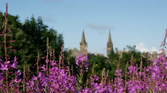 Focus pull from flowers at Holyrood Park to buildings in Edinburgh Scotland Stock Footage
