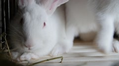 White rabbit sniffing close up Stock Footage