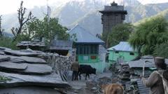 Kamru tower with farmer with cows in street,Kamru,Kinnaur,India Stock Footage