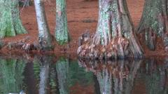 Male and female Mallard wild ducks swim in a pond Stock Footage