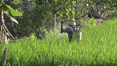 Man sprinkling field at The Mekong Delta, Vietnam Stock Footage